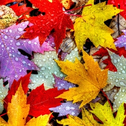 Jigsaw puzzle: Colorful leaves