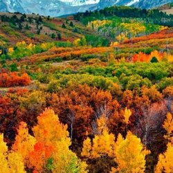 Jigsaw puzzle: Autumn coloring