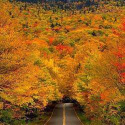 Jigsaw puzzle: The road to the autumn tunnel