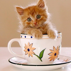 Jigsaw puzzle: Cat in a cup