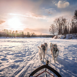 Jigsaw puzzle: Dog sled