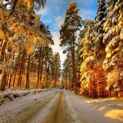 Jigsaw puzzle: In winter along the forest road