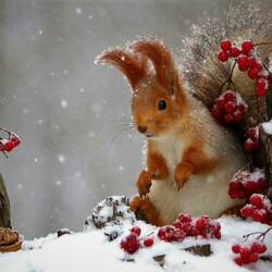 Jigsaw puzzle: Squirrel in winter