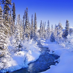 Jigsaw puzzle: Winter forest