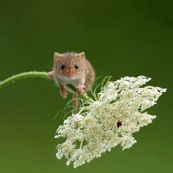 Jigsaw puzzle: Tiny mouse