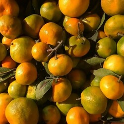 Jigsaw puzzle: Tangerines