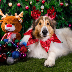 Jigsaw puzzle: New year dog