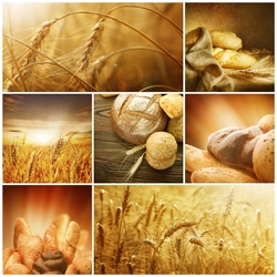 Jigsaw puzzle: Bread is the head of everything