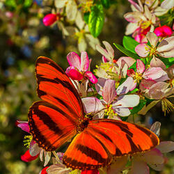 Jigsaw puzzle: Butterfly on a flowering tree