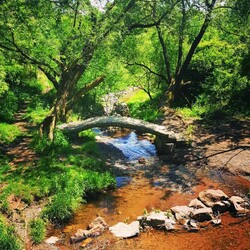 Jigsaw puzzle: Bridge in the forest
