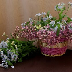 Jigsaw puzzle: Forget-me-nots and lilacs