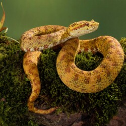 Jigsaw puzzle: Snake in nature