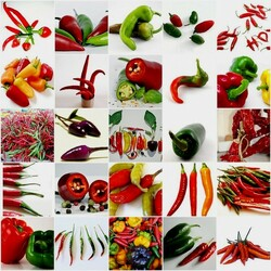 Jigsaw puzzle: Collage of peppers
