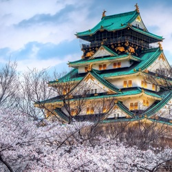 Jigsaw puzzle: Cherry blossoms