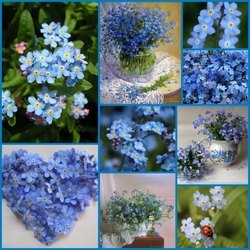 Jigsaw puzzle: Blooming blue
