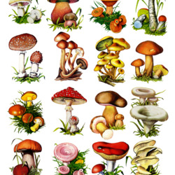 Jigsaw puzzle: Mushrooms