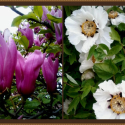 Jigsaw puzzle: Magnolia and peony