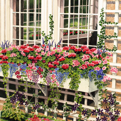 Jigsaw puzzle: Flowers under the window