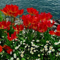 Jigsaw puzzle: Flowers by the sea