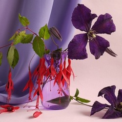 Jigsaw puzzle: Fuchsia and clematis