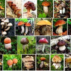 Jigsaw puzzle: All kinds of mushrooms